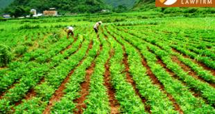 Đất trồng nông nghiệp hết hạn sử dụng