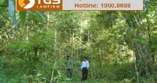 thủ tục giao rừng